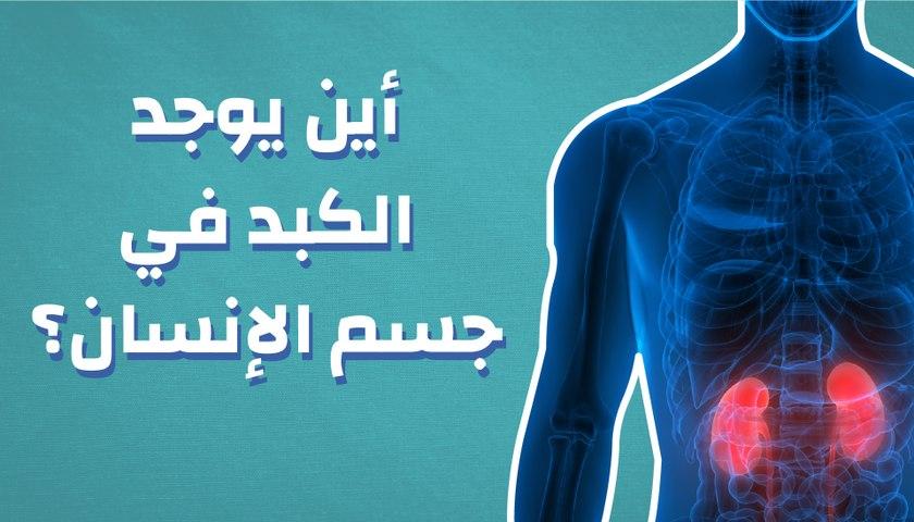 أين يوجد الكبد فى جسم الإنسان؟