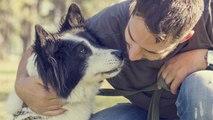 ¿Los perros se enamoran?