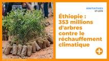 Éthiopie : 353 millions d'arbres contre le réchauffement climatique