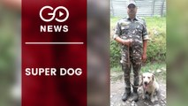 Canine Rescues Trapped Man In J&K