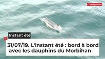 L'instant été du mercredi 31 juillet: bord à bord avec les dauphins du Morbihan