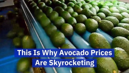 What's Behind The Cost Of An Avocado