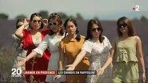 Découvrez pourquoi les champs de lavande en Provence sont devenus un passage obligé pour les touristes chinois ? - VIDEO