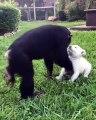 Une amitié amusante entre un singe et un chiot. A voir !