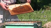 En Russie, des abeilles décimées par un pesticide très toxique