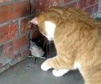 Voici Tom et Jerry dans la vraie vie. Hilarant !
