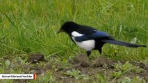 Birds Aren't Adapting Fast Enough To Climate Change, New Study Warns