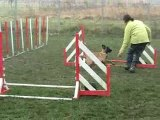 entraînement agility