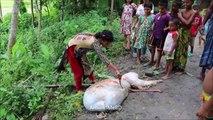 Village Kids Can Clean & Cook Cow Intestine - Tasty Intestine Gravy Curry Prepared By Children