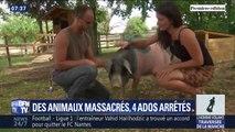 16 animaux tués dans une ferme pédagogique, 4 ados arrêtés: ce que l'on sait de ce drame dans l'Aube