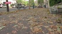 Sécheresse et canicule : les feuilles des arbres tombent en plein été