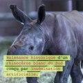 Naissance d'un rhinocéros blanc conçu par insémination artificielle