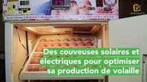 Burkina Faso: Solar and electric incubators to optimise poultry production