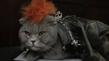 New York: cat fashion show at the Algonquin Hotel