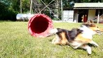 L'agility : « d'abord une grande complicité entre le maître et son chien »
