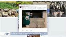 Haute-Garonne : deux nouvelles permanences de la majorité vandalisées
