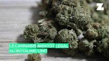 D'ici quelques années, le cannabis pourrait être légalisé au Royaume-Uni