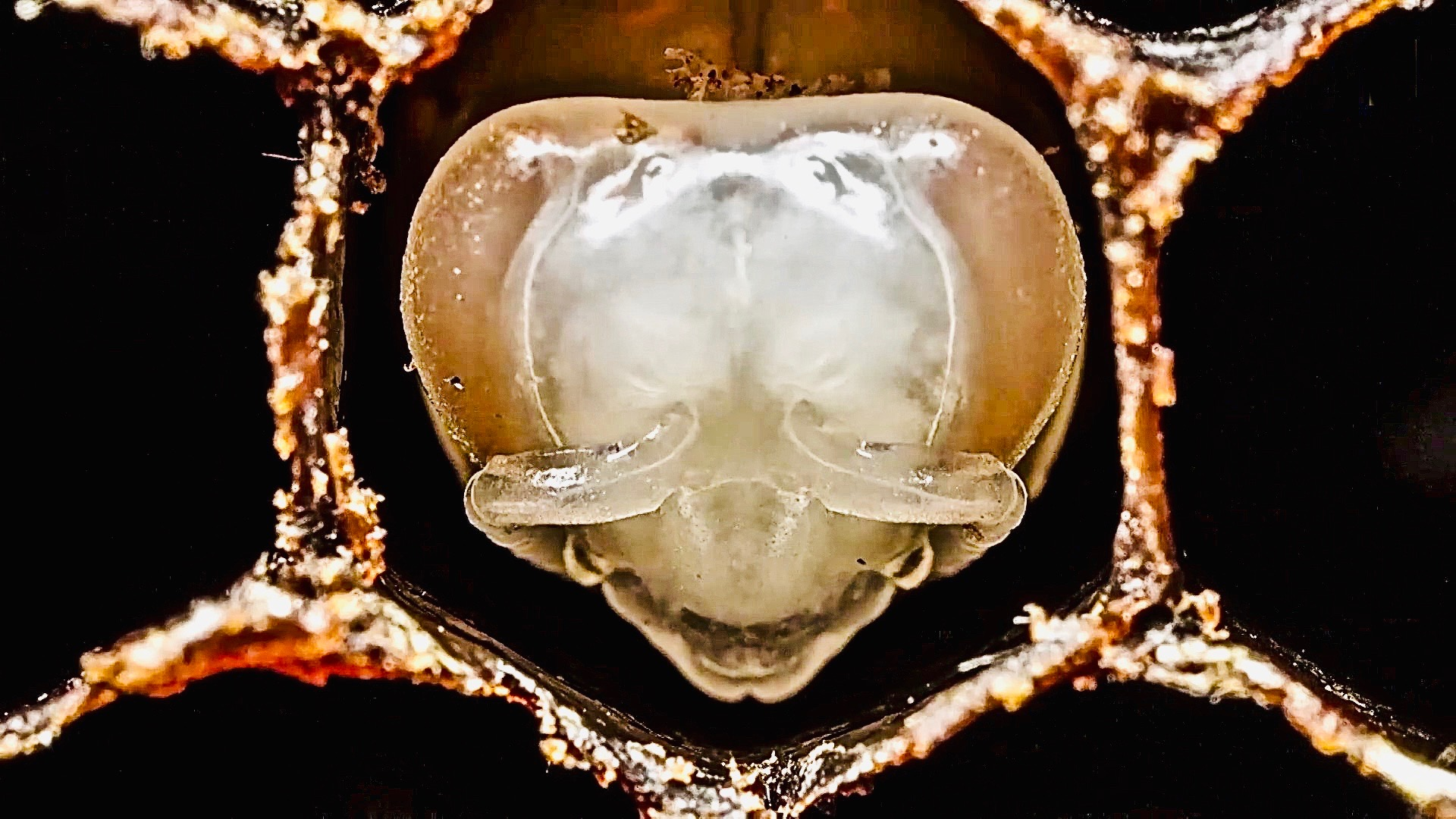 How Bees Are Born ~ Amazing Footage
