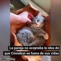 Pareja en Estados Unidos pagó 25 mil dólares para clonar a su amado gato