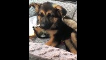 Cute Puppies Sleeping Compilation - Puppies Sleeping In Bed - Puppies TV