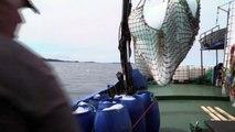 Caçadores de icebergs vivem abundância no Canadá