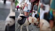 Cutest Dogs And Puppies In The World - Funny Videos Of Puppies Compilation - Puppies TV