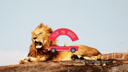 Wiese - The Lion Sleeps Tonight