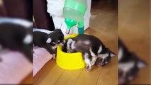 Funniest Videos Of Puppies - World Best Cutest Puppies - Puppies TV