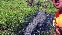 Un touriste joue avec un énorme alligator en Nouvelle Orléans