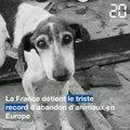 Abandon d'animaux: Une responsable de la SPA sonne l'alerte