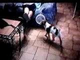 Moogly bébé & Bebel qui jouent avec une gamelle