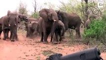 Des éléphants tentent d'intimider des touristes pendant un safari... Impressionnant