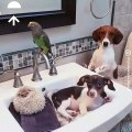 Quand un perroquet, un chat et un chien se croit dans un spa pour animaux  Trop drole !