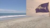 3 personnes mordues par des requins en 24 h sur une plage de Floride