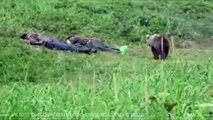 Un petit ourson réveille deux voyageurs en pleine sieste