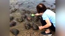 Une femme bienveillante nettoie des carapaces de tortues