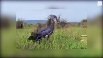 The 'real-life Harry Potter Hippogriff' is near Lake Victoria, Uganda