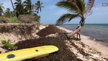 Amazon deforestation causes Dominican Republic beaches to be covered in stinky seaweed