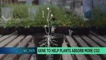 Un gène pour aider les plantes à absorber plus de CO2 [Sci-tech]