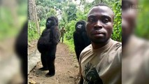 These Gorillas Posed Like Humans For A Photo (VIDEO)