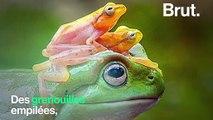 Certaines photos virales d'animaux cachent une triste réalité