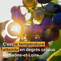 Réchauffement climatique : quelles vignes en 2050 ?
