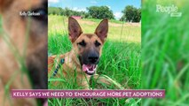 Why August 17 Is the Best Day to Adopt a New Pet