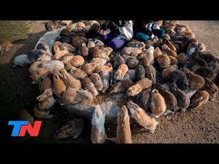 Okunoshima: la isla de los conejos