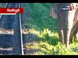 बीच जंगल में अचानक हाथी ने ट्रैक पर आकर ऐसे रुकवाई ट्रेन..elephant suddenly came on the track and stopped siliguri dinhata passengber train in the midst of forest intresting visual nsng nodsb