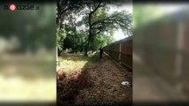 Poliziotto sbaglia mira e spara alla donna anzichè al cane: morta in ospedale | Notizie.it