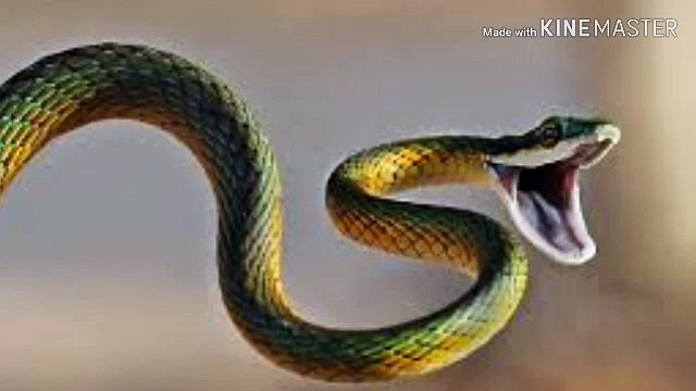 Snake videos | Unknown facts about Snakes | about Snakes