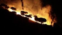 Incendi in Sicilia, governatore Musumeci: chi sa deve denunciare