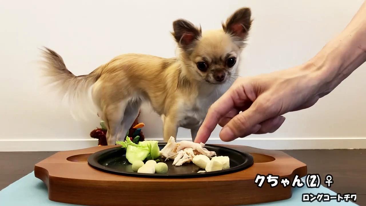 ふくちゃん チキンとボーロ chihuahua eats chiken