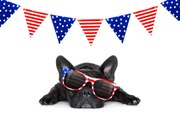 4th of July Stress for Dogs, How to Reduce it